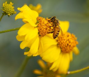 Bee Sting Allergy Specialist NJ